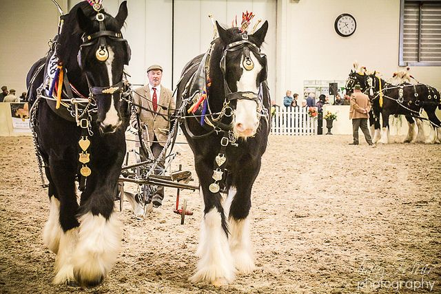 Shire Horse Society Spring Show 2013 | Flickr - Photo Sharing!