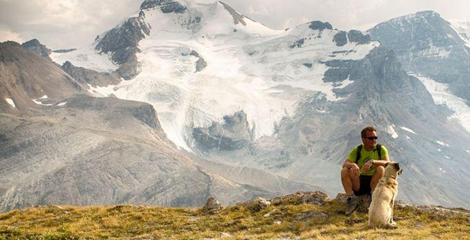 Evcil hayvanlar ile seyahat rehberi haberi www.dunya.com'da