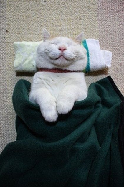 ... a rolled up facecloth and a blanket is the the way to happiness my friends - Imgur