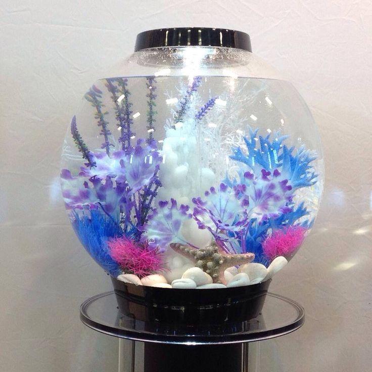 The 25 best biorb fish tank ideas on pinterest biorb for Betta fish decor