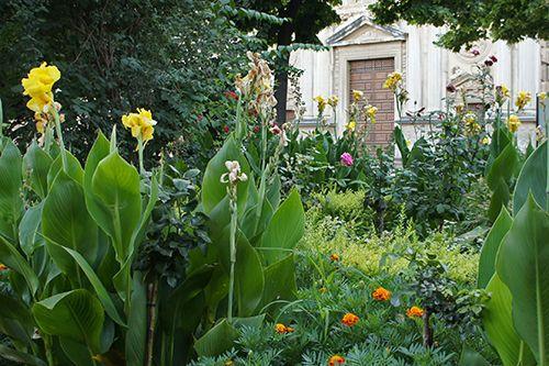 PLANTA DEL MES DE AGOSTO: LA CAÑA DE INDIAS  Bajo el nombre de Caña de Indias (Canna x generalis L. H. Bail.) se agrupan un extenso número de plantas ornamentales híbridas creadas a mediados del siglo XIX, que se derivan de la Canna indica L., C. flaccida Salib. y C. glauca L., entre otras, todas ellas procedentes del Centro y Sur de América. Son plantas de pleno sol muy decorativas por sus grandes hojas (de hasta 50 cms de longitud) que recuerdan las de la banana, sus vistosas flores.....