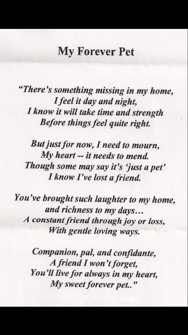 My Forever Pet Grieving Loss Of Dog Dog Poems Losing