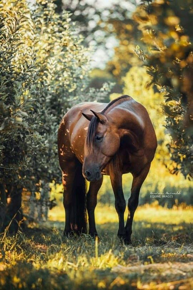 Pin by Dawn Allison on Horse Showing in 2020 Horses