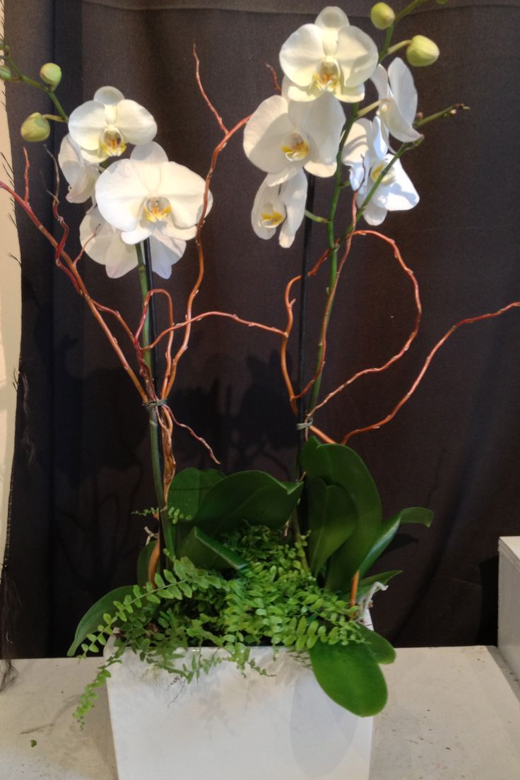 Double white Phalaenopsis Orchid Planter