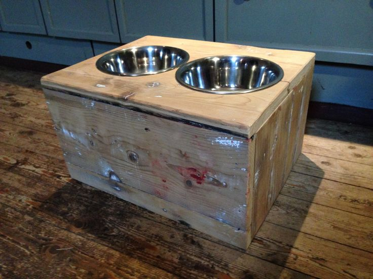 Drinking bowl die the dog