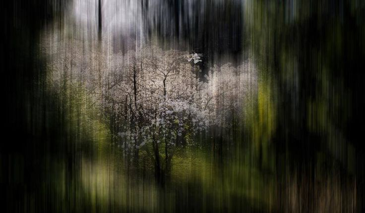 SELECTION OF THE DAY by #Expo #FineArt #Photography Nympha Como - 2015 Photo © Marcello Scolari #Nature