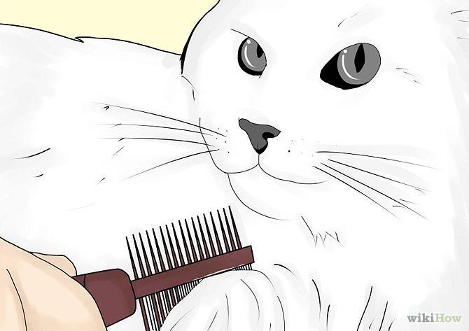Kill Fleas and Ticks on Cats