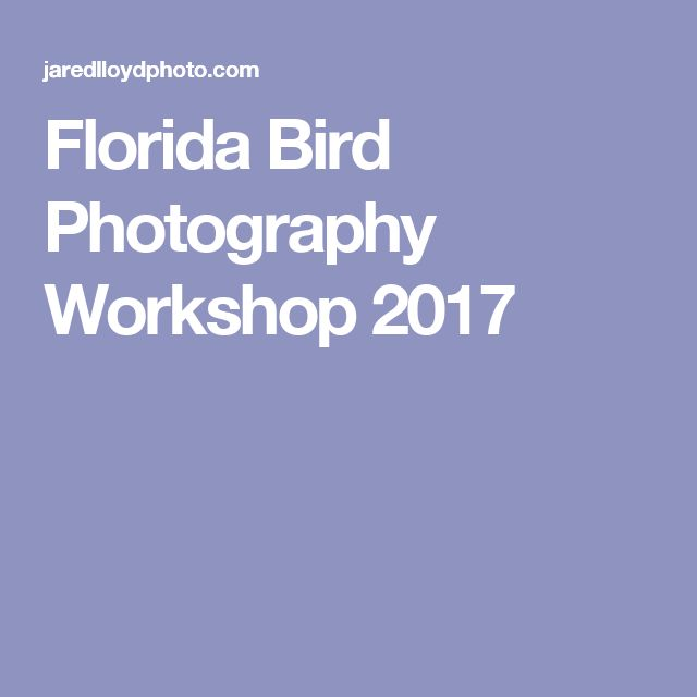 Florida Bird Photography Workshop 2017