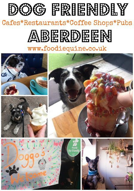 www.foodiequine.co.uk Over fifty dog friendly places to eat and drink in Aberdeen City and Shire. Your four legged friend will be made very welcome in this selection of Cafes, Restaurants, Coffee Shops and Pubs.