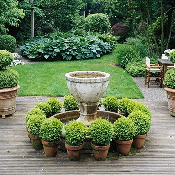 Boxwood in terracotta pots. I like how they take something formal and make it more whimsical. You could also move them around the garden. Idea: use terra cotta pots of various sizes interspersed among more formal plantings, or for visual variety.