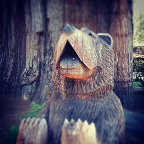 Redwood Bear