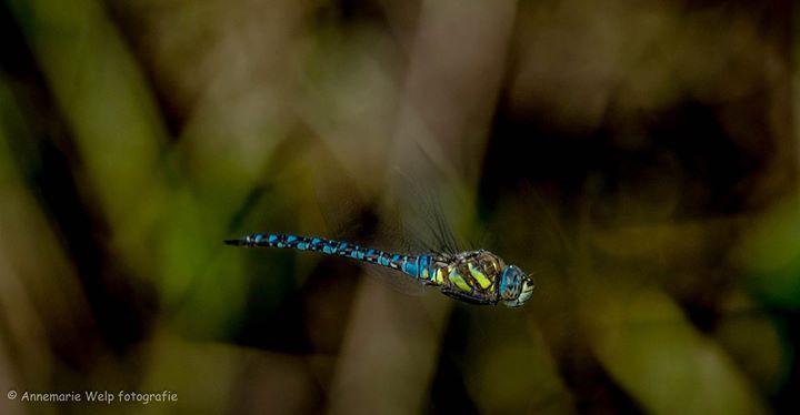 Natuurfotografie Annemarie Welp