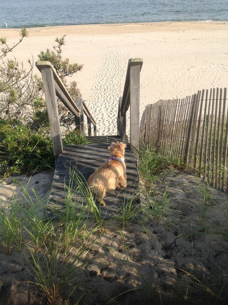 Winnie slatkin looking for her pals on her beach east for Harry slatkin east hampton