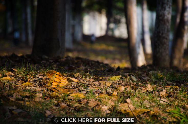 Autumn Black Brown Grass Green Leaves Orange Trees