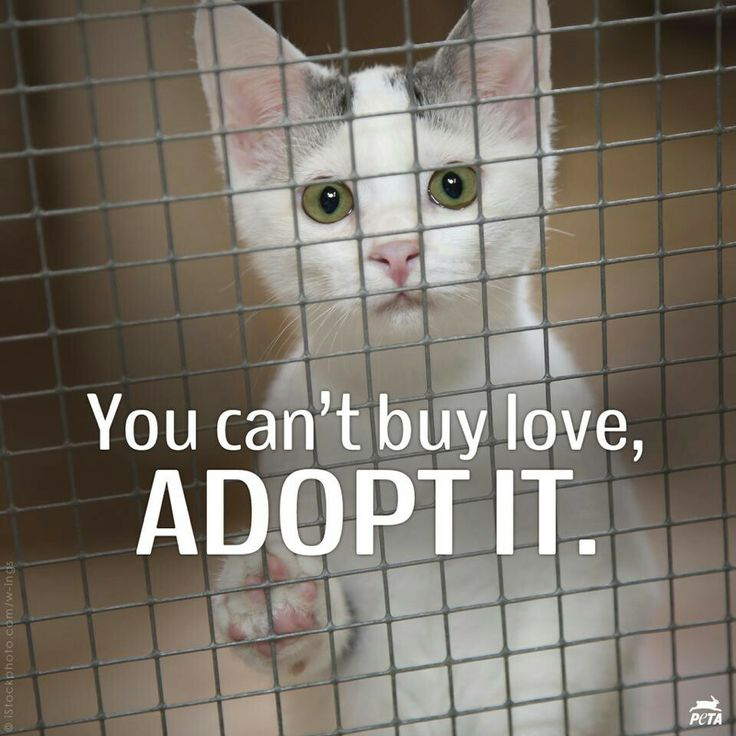 Find this Pin and more on Animal Shelter by anbryant24.