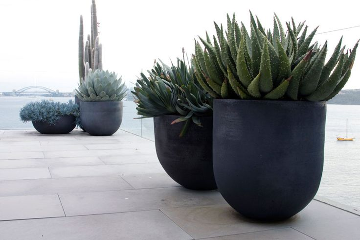Cacti or succulents in containers -- very contemporary and clean-looking