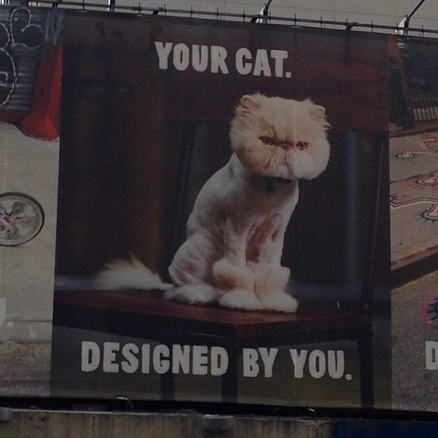 """Meow! Look@Jessica Villarreal- found a billboard of a kitty who's """"almost"""" as adorable as Smokey!!! Miss you!#cats#catsofinstagram#billboard#ny#newyork#iloveny#meow#lion#lioncut#cute#adorable#lookatthatface#purr#rawr#friends#pets15210/12/201307:22"""