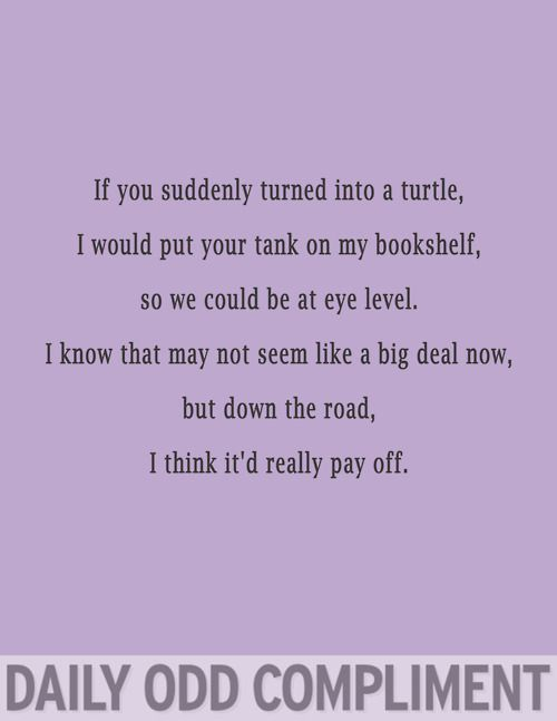 """""""Turtle Tank"""" Daily Odd Compliment"""