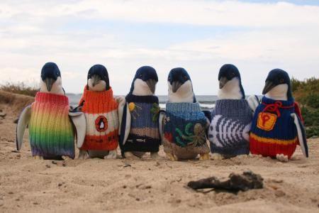 Penguins Foundation - foto divulgação   Parte dos pinguins resgatados na Austrália ganham uma roupa de malha. Algumas delas foram produzidas por Alfred Date, 109 anos.  O idoso ouviu o pedido para produzir as peças no ano passado. Elas seriam usadas pela Penguin Foundation nos animais para salvá-los de um derramamento de óleo.