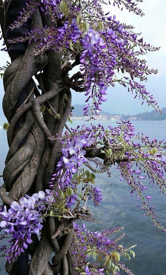 ~~Nature's garden, kissed by a violet wind~~ pin/create/button/? Visit Angi's profile on Pinterest....