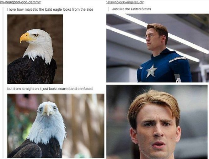 Captain America Marvel America Tumblr Funny Humor Steve Rogers The Avengers Bald Eagle LOL