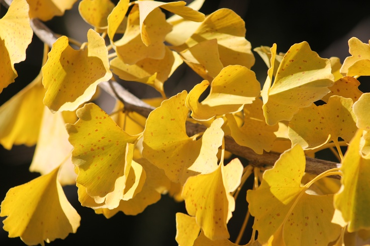 otoño..