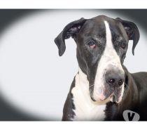 Fotos para Ossos do Ofício - A creche do seu cão na Vila Mariana - SP