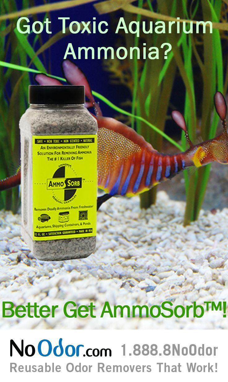 Killer freshwater aquarium fish - Ammosorb Aquarium Ammonia Removal Deco Rocks Safely Removes Toxic Ammonia The Killer Of Fish This Also Reduces Stress Disease In Fish