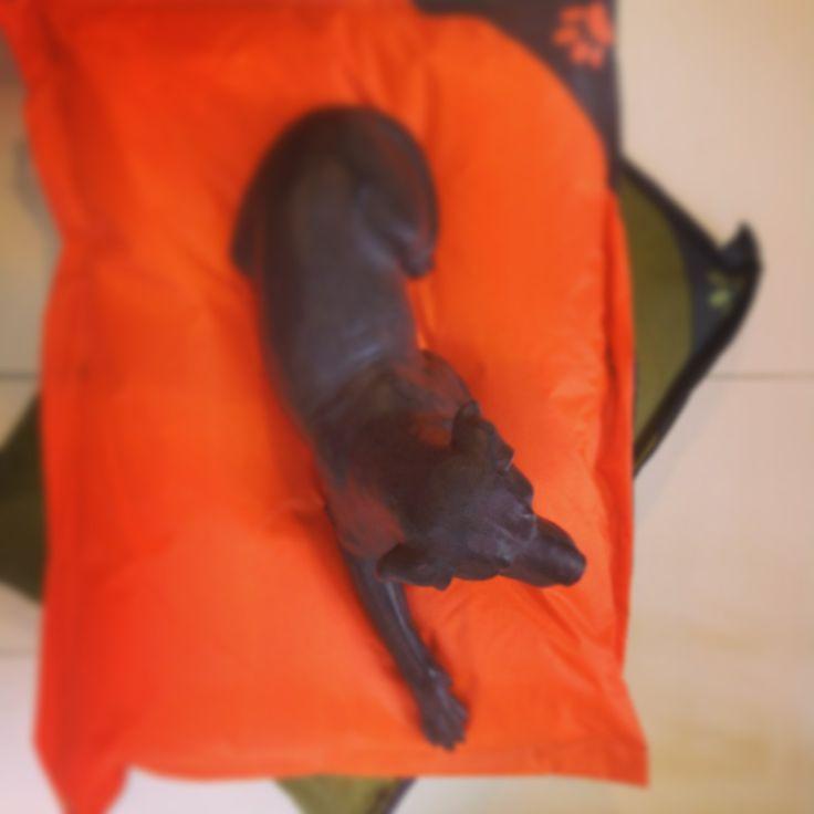 Oh my dog!! cuscinoni