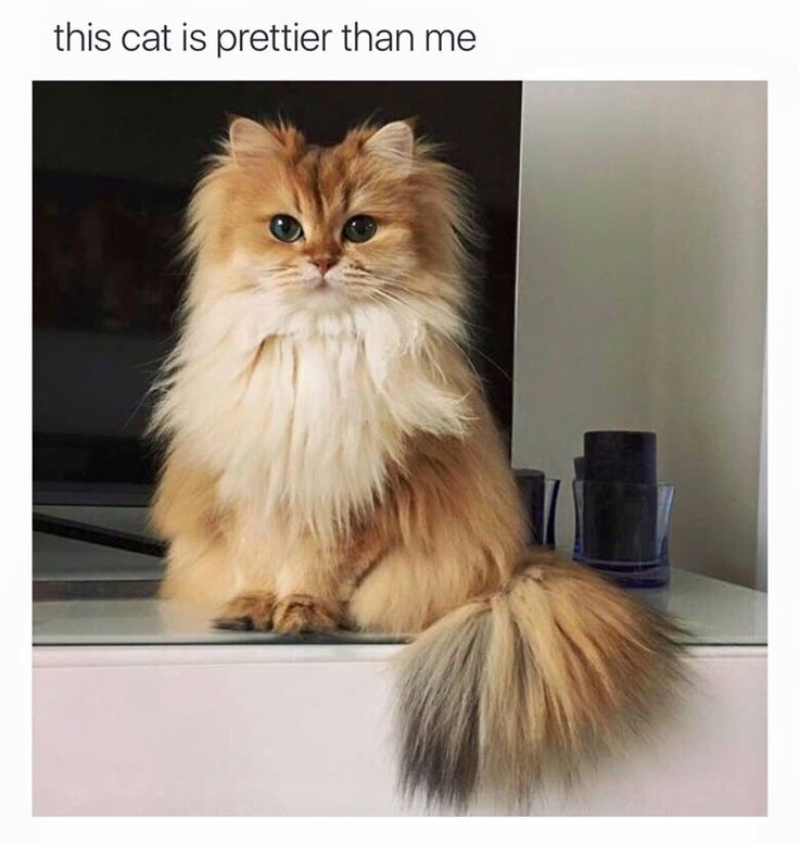 This cat is prettier than me.