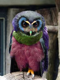 Not sure this is for real but so lovely-Bright Feather Owl