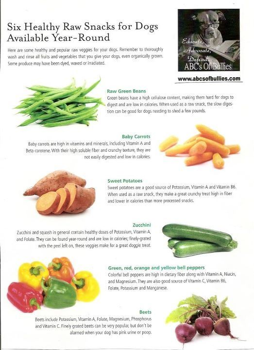 6 Raw Veggie Foods for your Dog