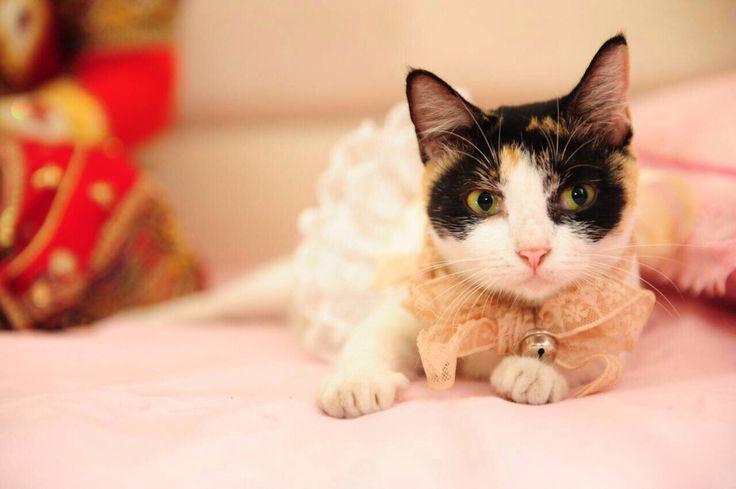 Michan ndut #wedding #cat