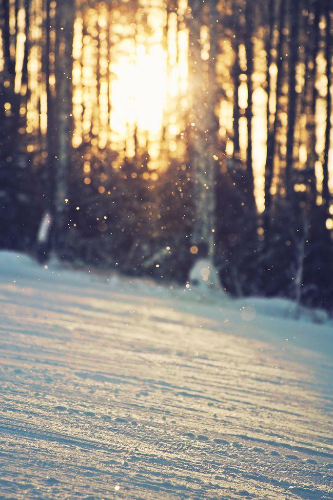 golden hour at wintertime