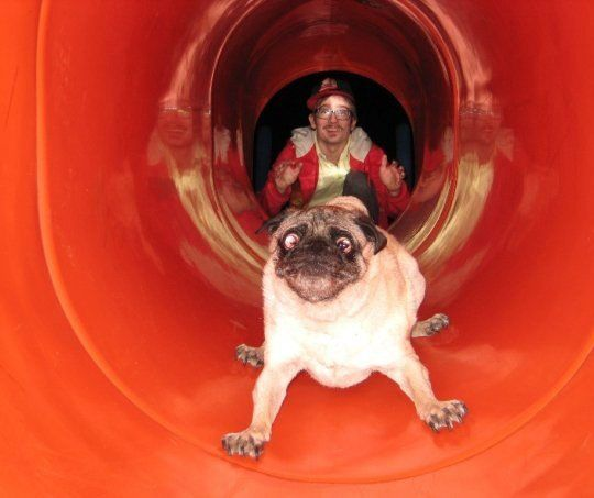 Best reaction.Funny Dogs, Pug-Dog, Funny Pictures, The Face, Funny Pugs, Pugs Dogs, Dogs Pictures, Animal, Dogs Face