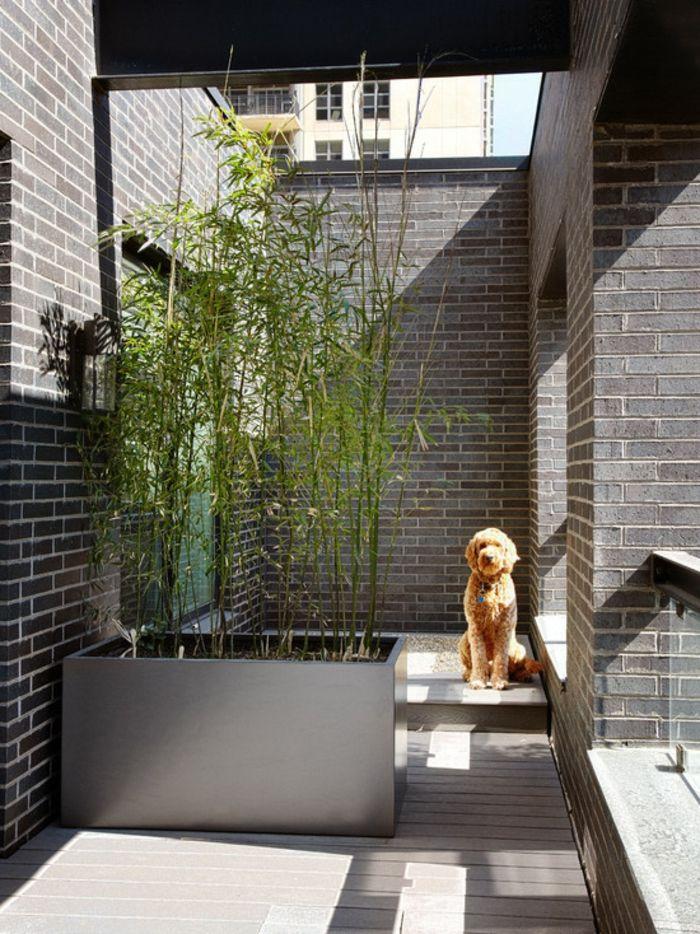 planter des bambous, planter bambou en bac