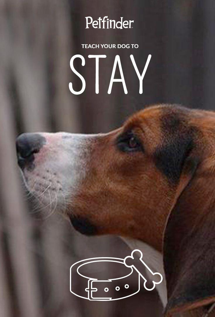 Petfinder Dog Training Collar