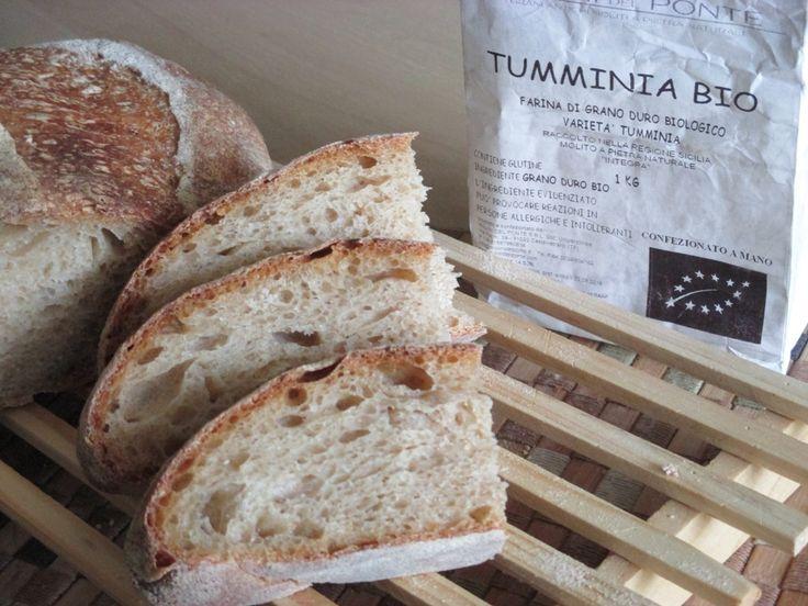Pane con 40% Tumminia e lievito madre  Finalmente ho potuto provare la farina di Tumminia, unafarina integrale di grano duro siciliano biologico, no