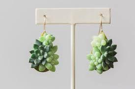 Znalezione obrazy dla zapytania succulent plant