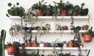 Ultimate Plant Porn: 17 Instagram Accounts Giving Us Green-Fingered Goals | The Huffington Post