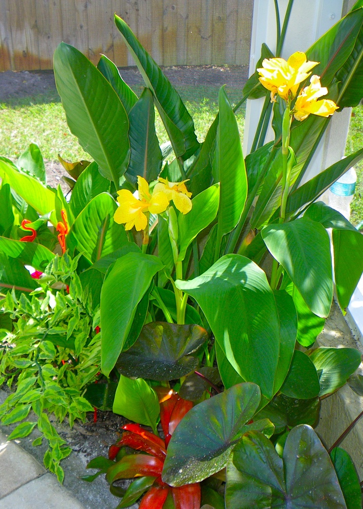 1000 ideas about pool landscaping plants on pinterest for Swimming pool landscaping plants