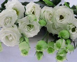 Mariachi White - Lisianthus - Flowers and Fillers - Flowers by category | Sierra Flower Finder