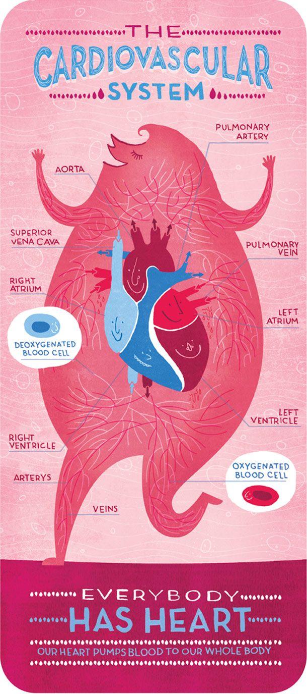"""""""Body Systems"""", ou l'anatomie du corps humain expliqué à travers cinq posters mignons et colorés imaginés par la graphic designer Rachel Ignotofsky : le sys"""