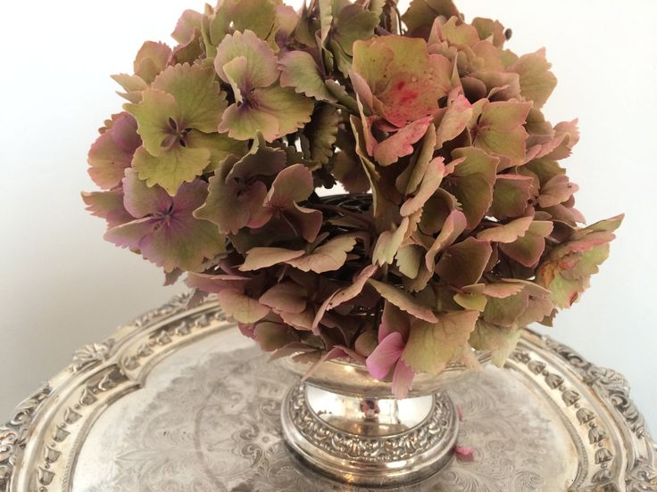 Silver plated vintage rose bowl - I always use these for drying my hydrangeas in the autumn