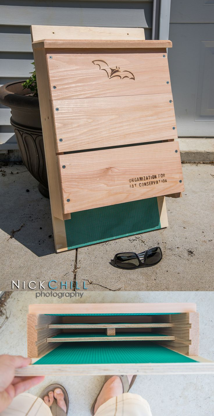 Welcome a colony of MOSQUITO EATING bats to your yard with ...