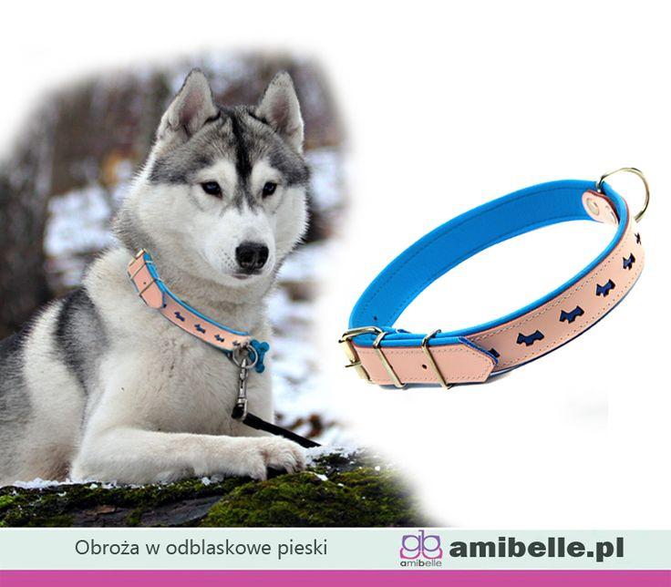 Zadbaj o bezpieczeństwo swojego psa w czasie jesiennych spacerów. W obroży z odblaskowymi elementami będzie bardziej widoczny. 🐶✨🔆  www.amibelle.pl #obroża #odblaski #spacerzpsem