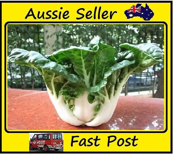 200 Pcs Bantom Cabbage Seeds Sweet Cabbage Vegetable Easy Grow