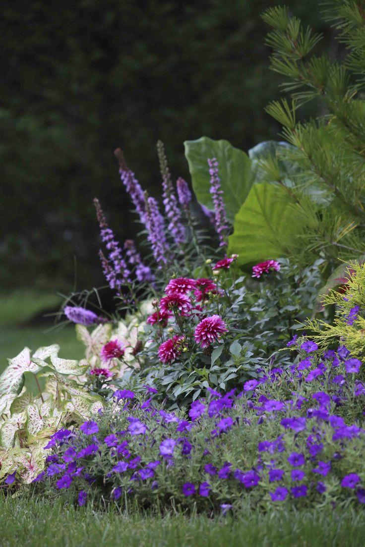 1435 best decks backyards images on pinterest garden ideas