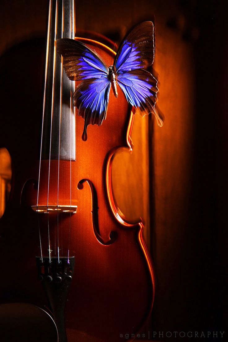 Violin with butterfly