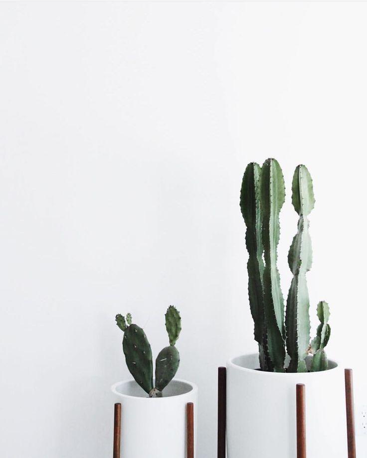 25 Best Ideas About Indoor Cactus On Pinterest Cactus